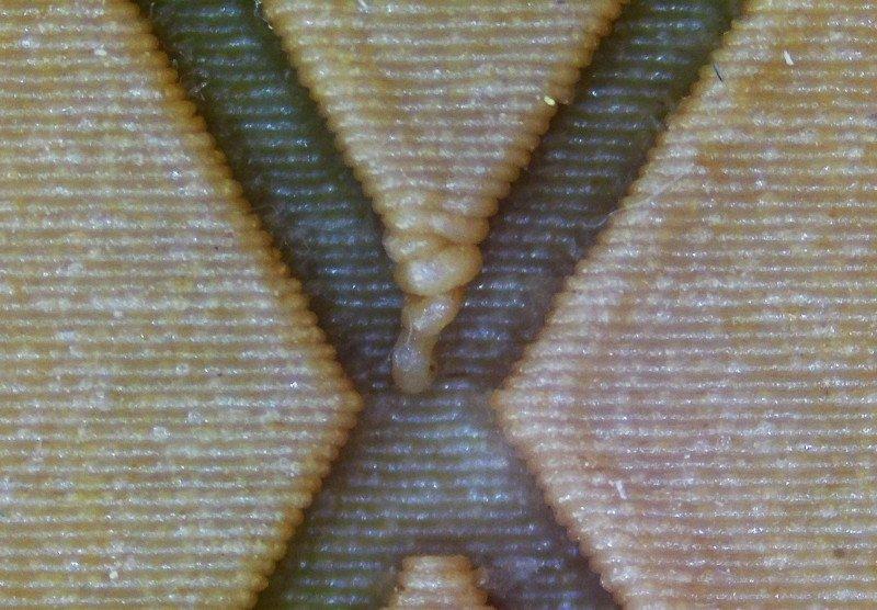 Древесный PLA филамент от производителя TOPZEAL