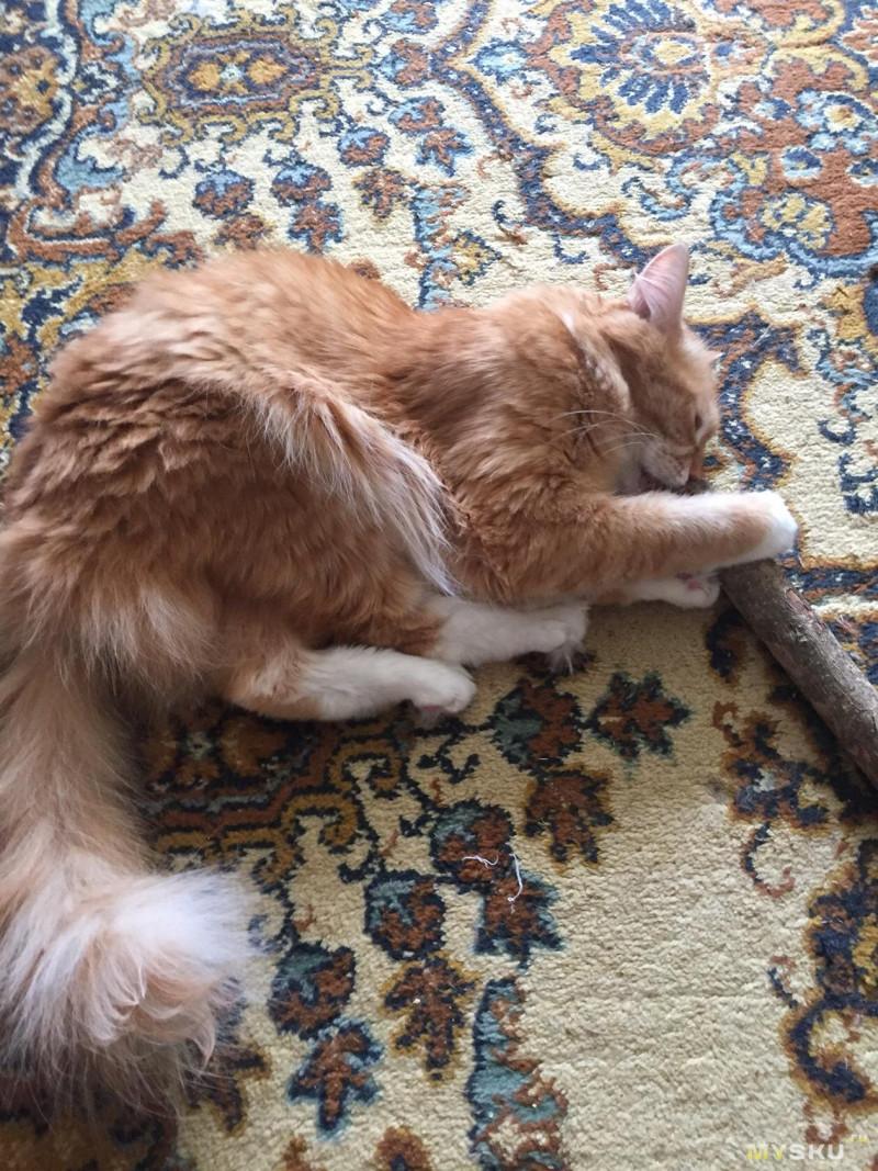 Жевательные палочки для кота :)